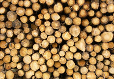 Stack of chopped logs Stock Image