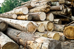Stack of chopped trees. Deforestation concept: stack of numerous chopped trees Stock Photos
