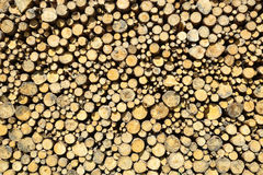 Stack of chopped wood Stock Photo
