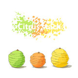 Stack of citrus sliced fruits Royalty Free Stock Images