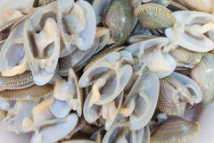 The stack of clams wait cooking Royalty Free Stock Photo