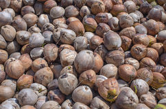 Stack of the coconut for coconut oil industry Royalty Free Stock Images