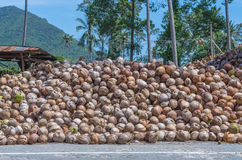 Stack of the coconut beside the street for coconut oil industry Royalty Free Stock Photography