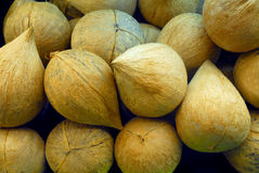 Stack of coconuts. Background of heap or pile of whole coconuts Royalty Free Stock Photo