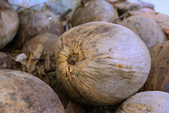 Stack of coconuts. For process to Thai food Royalty Free Stock Image