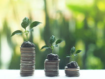 Stack coins , Financial concept. Stack coins on green bogey stock images