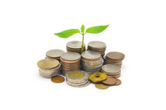 Stack of coins with growing sprout Royalty Free Stock Photos
