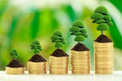 Growth tree on collect coins. Stack of coins with growth sprout plant with fresh green nature blurred background, Investment concept Royalty Free Stock Photo