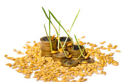 Stack of coins and rice seeds Royalty Free Stock Photo