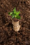 Stack of coins and sapling Royalty Free Stock Images