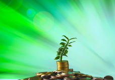 Stack of coins with small plant Stock Photography