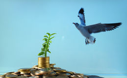 Stack of coins with small plant Royalty Free Stock Photo