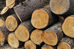 Stack of coniferous chocks Stock Photo