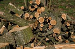 Stack of construction raw timber in sawmill Royalty Free Stock Photo