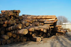 Stack of construction raw timber in sawmill yard Stock Images