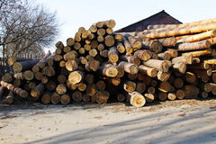 Stack of construction raw timber in sawmill yard Royalty Free Stock Photo