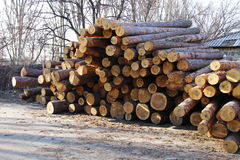 Stack of construction raw timber in sawmill yard Stock Photos