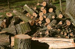 Stack of construction raw timber in sawmill Stock Images