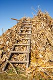 Stack of corn stems Royalty Free Stock Photo