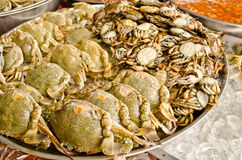Stack of crab in market Royalty Free Stock Image