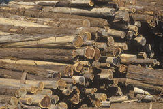 A stack of cut logs Royalty Free Stock Photo
