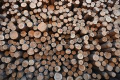 Stack of Cut Logs Royalty Free Stock Photo