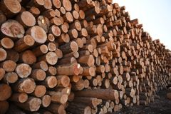 Stack of Cut Logs Stock Photo