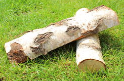 Stack of cut logs firewood from silver birch tree Royalty Free Stock Photo