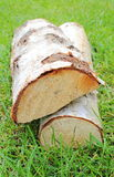 Stack of cut logs firewood from silver birch tree Royalty Free Stock Photos