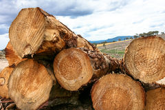 Stack of cut logs in forestry Royalty Free Stock Photos