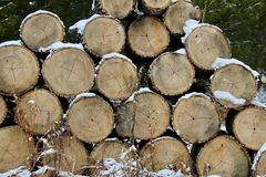 Stacked logs in the snowy woods royalty free stock photos