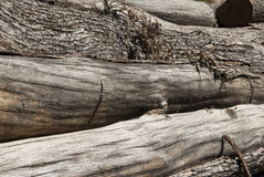 Stack of cut oak logs Royalty Free Stock Image