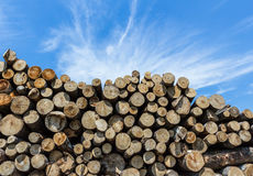 Stack of cut timber Stock Images