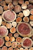 Stack of cut timber logs Royalty Free Stock Photography