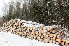 Stack of cut timber logs Stock Images