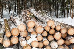Stack of cut timber logs Stock Photo