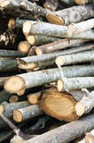 Stack of cut tree branches Royalty Free Stock Photo