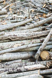 Stack of cut tree branches Royalty Free Stock Image