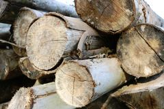 Stack of cut tree trunks royalty free stock photo