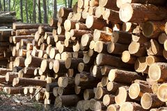 Stack of cut trees. Stock Photography
