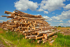 Stack of cut trees in a forest Stock Photography