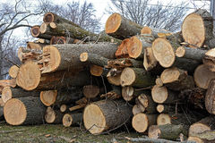 Stack of cut trees Royalty Free Stock Images