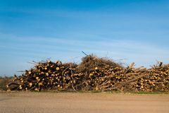 Stack of cut trees stacked under blue sky Stock Photo
