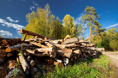 Stack of cut wood Stock Images