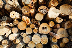 Stack of cut wood Stock Image