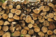 Stack of cut wood from forest Royalty Free Stock Photo