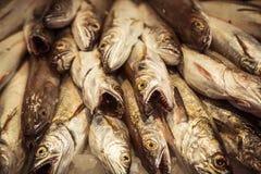 Stack of dead predator fishes. Mercat de Sant Josep Barcelona, stack of dead predator fishes Stock Photo