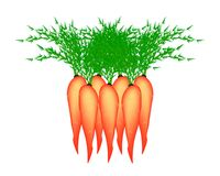Stack of Delicious Fresh Carrot Stock Images