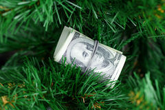 Stack of dollars on the green tree Stock Image