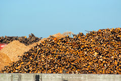 Stack of dried fire wood logs Royalty Free Stock Photo